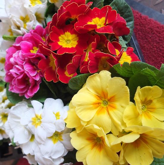 Blumen Zum Frühlingsanfang Am 21032013